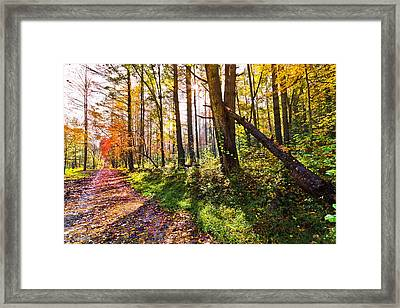 Autumn Trail Framed Print by Debra and Dave Vanderlaan