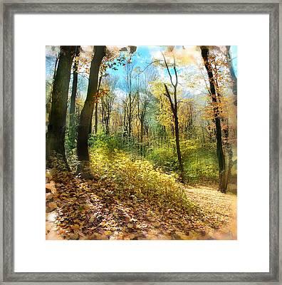 Autumn Trail Framed Print