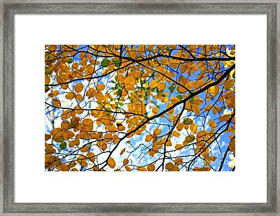 Autumn Tree Branches Framed Print by Elena Elisseeva
