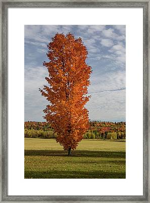 Autumn Tree Framed Print by Brent L Ander