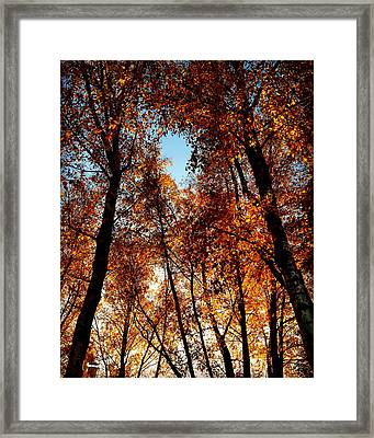 Autumn Tree Framed Print by Niki Mastromonaco