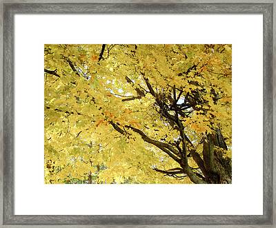 Framed Print featuring the photograph Autumn Tree by Raymond Earley