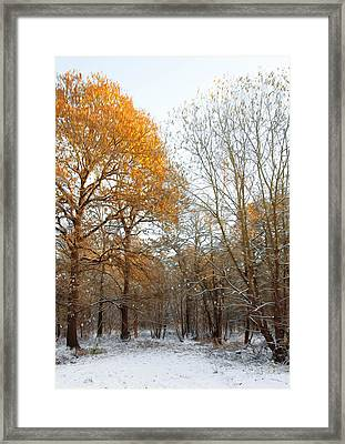Autumn Tree Framed Print by Svetlana Sewell