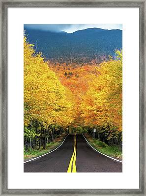 Autumn Tree Tunnel Framed Print