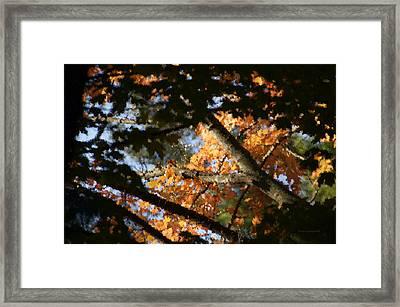 Autumn Trees 2015 Pa 01 Framed Print