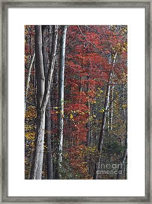 Autumn Trees 8261c Framed Print