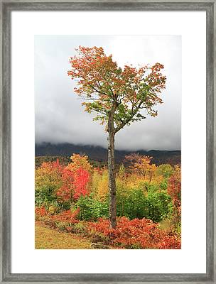 Autumn Trees Along The Kancamagus Highway Framed Print
