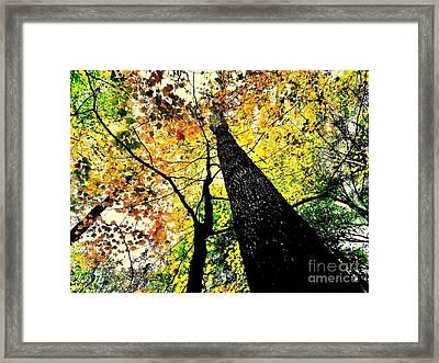 Autumn Trees Digitally Painted  Framed Print by Scott D Van Osdol