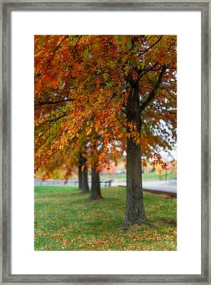 Framed Print featuring the photograph Autumn Trees In A Row by April Reppucci