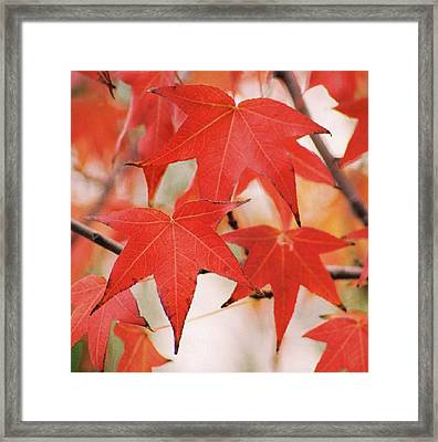 Autumn Trio Framed Print