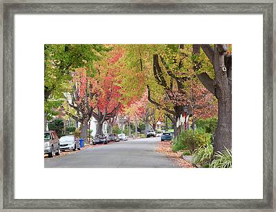 Autumn Urban Forest  Framed Print by Sheila Fitzgerald