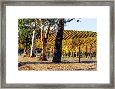 Autumn Vines Framed Print by Bill Robinson