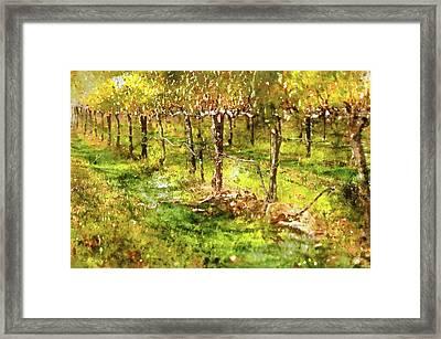 Autumn Vineyard Framed Print by Brandon Bourdages