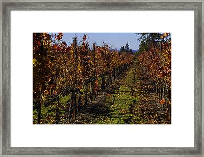 Autumn Vineyard Colors Framed Print by Garry Gay