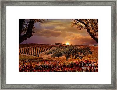 Autumn Vineyard Framed Print by Stephanie Laird