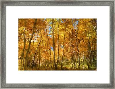 Autumn Walk Among The Aspens Framed Print by Donna Kennedy