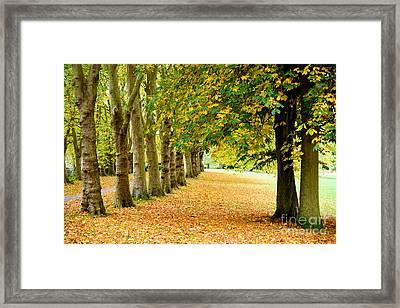 Autumn Walk Framed Print by Colin Rayner