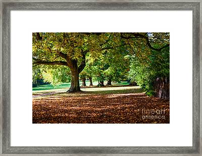 Autumn Walk In The Park Framed Print by Colin Rayner