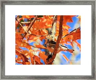 Autumn Warbler Framed Print