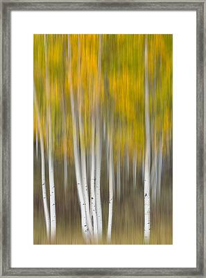 Framed Print featuring the photograph Autumn Was A Blur by Patricia Davidson