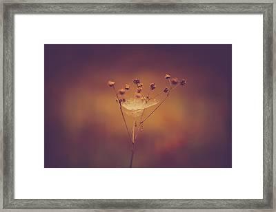 Autumn Web Framed Print by Shane Holsclaw