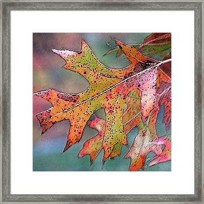 Autumn Whisper Framed Print by Suzy Freeborg