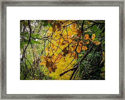 Autumn Whispers Framed Print by Andrea Mazzocchetti
