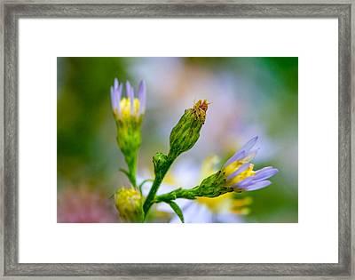 Autumn Wildflower Framed Print by Steve Harrington