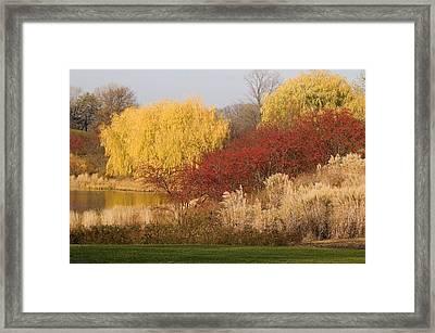 Autumn Willow Trees Framed Print by Elvira Butler