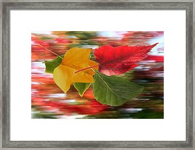 Autumn Wind Framed Print by Barbara  White