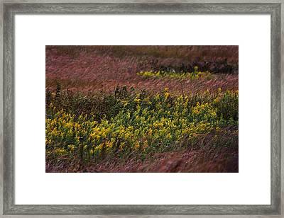 Autumn Wind Blowing Golden Rod Framed Print
