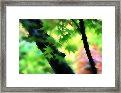 Autumn Wind Framed Print