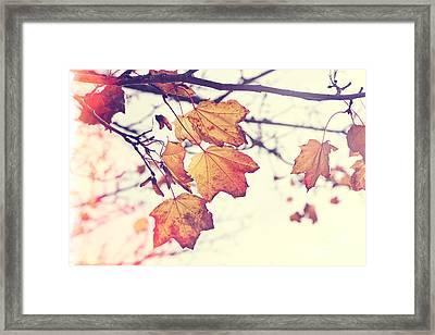 Autumn Wonder - Natalie Kinnear Photography Framed Print