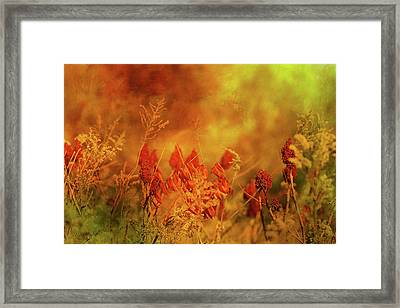 Autumn Wonders Framed Print