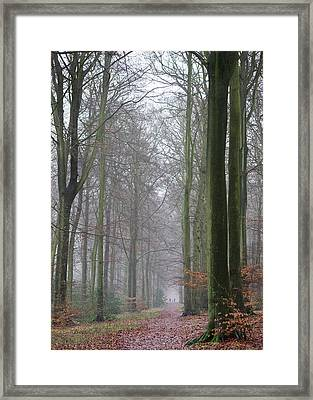 Autumn Woodland Avenue Framed Print