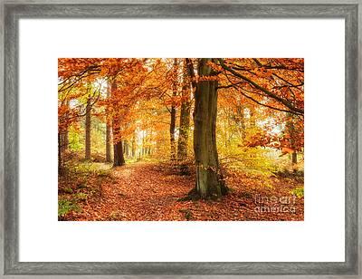 Autumn Woodland Framed Print by Janet Burdon
