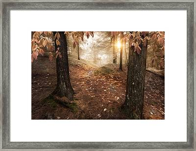 Autumn Woodland Framed Print by Robin-Lee Vieira
