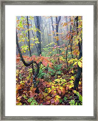 Autumn Woodland Framed Print by Thomas R Fletcher