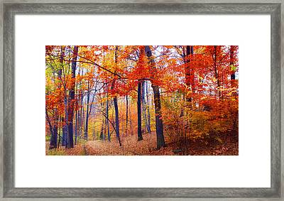 Autumn Woodland Trail Framed Print by Jessica Jenney
