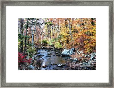 Autumn Woodlands Framed Print