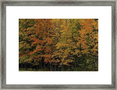 Autumn Woods Framed Print by Garry Gay