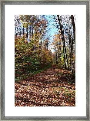 Autumn Woods Road Framed Print