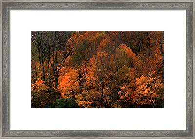 Autumn Woods Framed Print