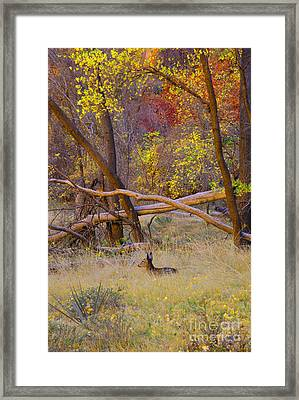 Autumn Yearling Framed Print by Dennis Hammer