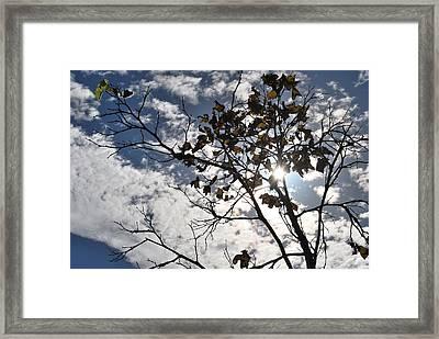 Autumn Yellow Back-lit Tree Branch Framed Print