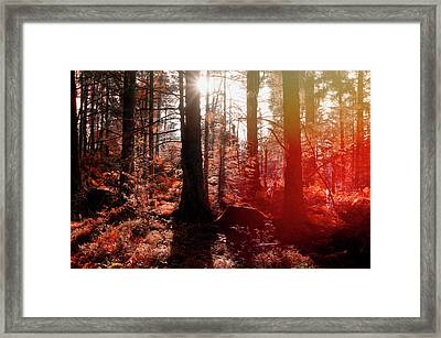 Autumnal Afternoon Framed Print