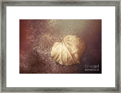 Autumnal Changes Framed Print by Jorgo Photography - Wall Art Gallery
