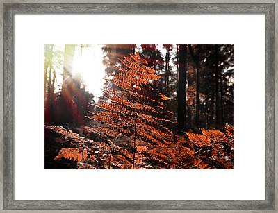 Autumnal Evening Framed Print
