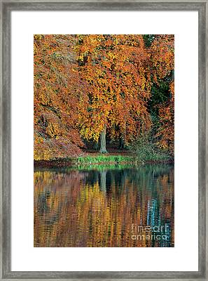 Autumnal Glory Framed Print by Tim Gainey