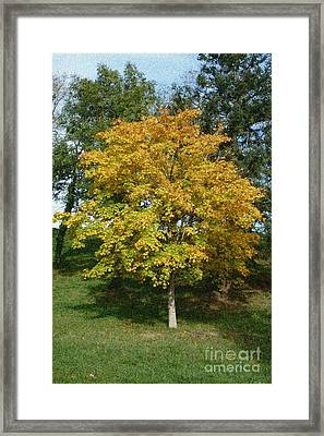 Autumnal Leaves And Trees Framed Print by Jean Bernard Roussilhe